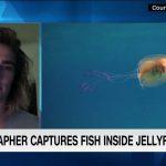 クラゲの中に入り込んで泳ぐ魚をオーストラリアの写真家が撮影