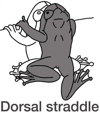 DorsalStraddle