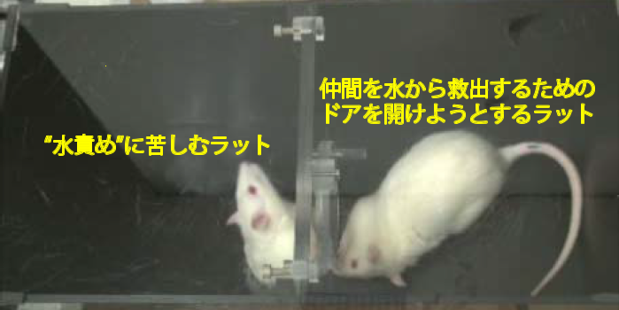 RatRescueAnnotated